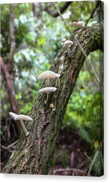 White Deer Mushrooms Canvas Print