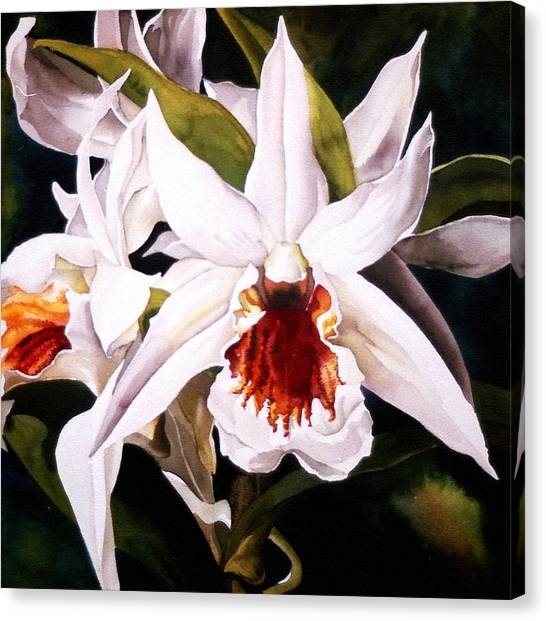 White Dendrobium Orchid Canvas Print