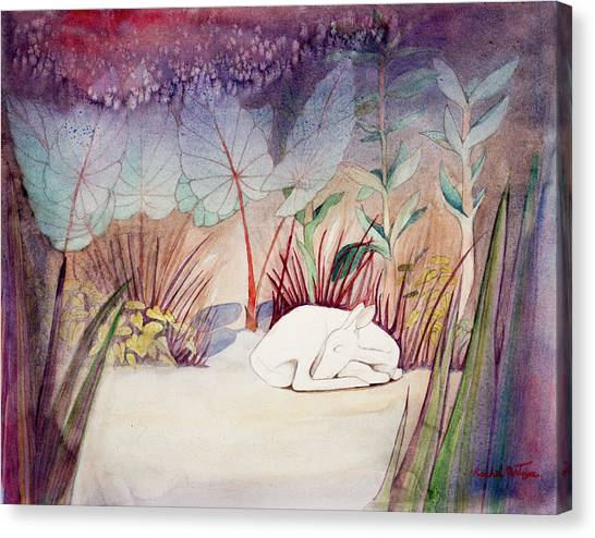 White Doe Dreaming Canvas Print