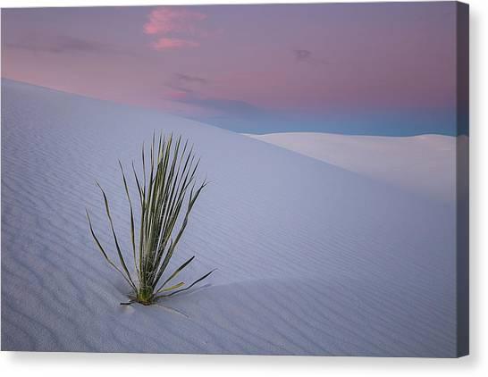 White Sand Canvas Print - White Dunes by Edgars Erglis