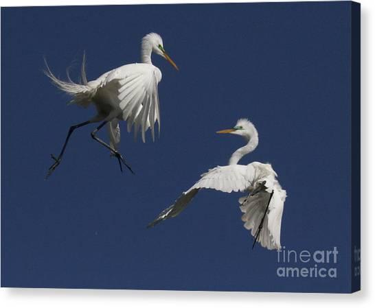 White Egret Ballet Canvas Print