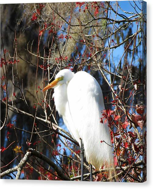 White Egret Bird Canvas Print