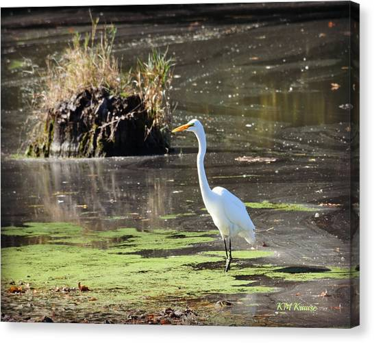 White Egret In The Shallows Canvas Print