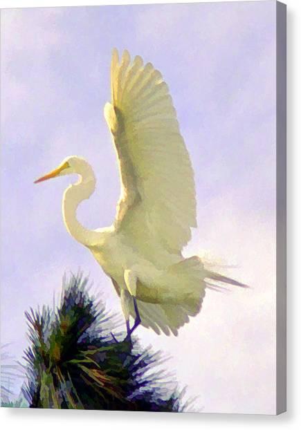 White Egret In Tree Canvas Print by Joel Cohen