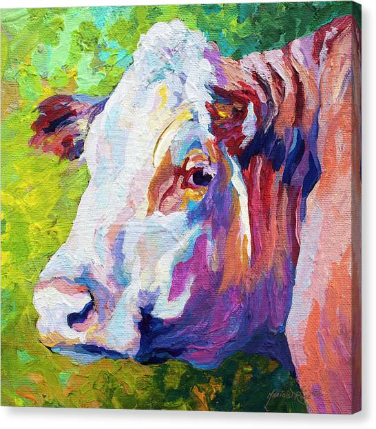 Cow Farms Canvas Print - White Face Cow by Marion Rose