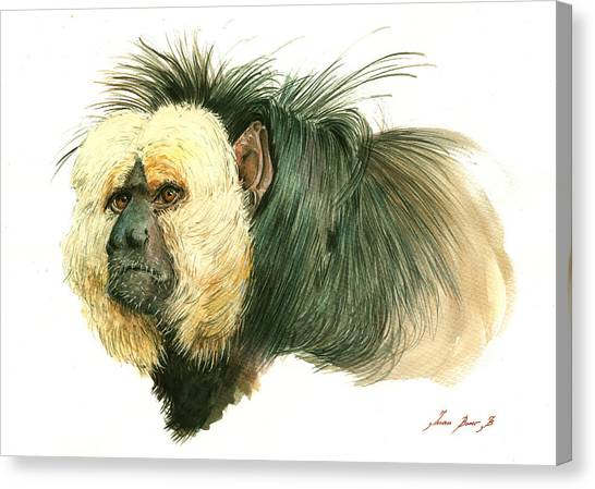Primates Canvas Print - White Faced Saki Monkey by Juan Bosco
