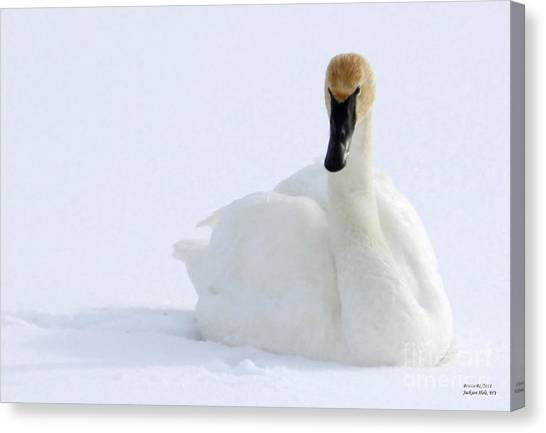 White Feathers On Snow Canvas Print