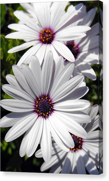 White Flower 1 Canvas Print
