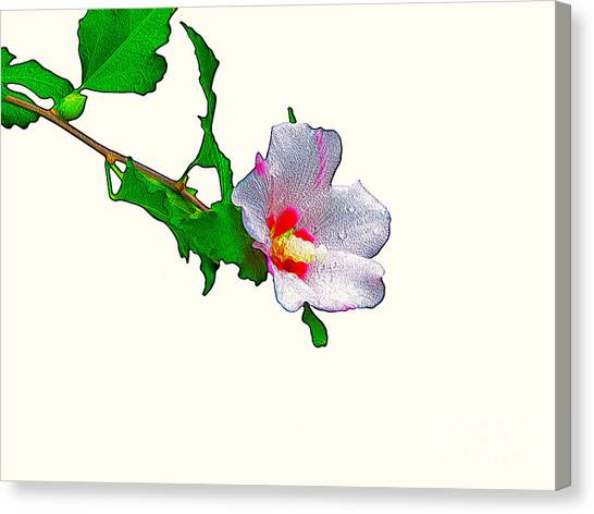 White Flower And Leaves Canvas Print