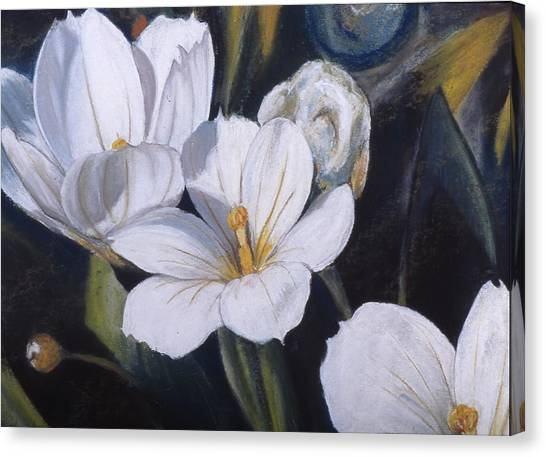 White Flower Study Canvas Print by Victoria Heryet