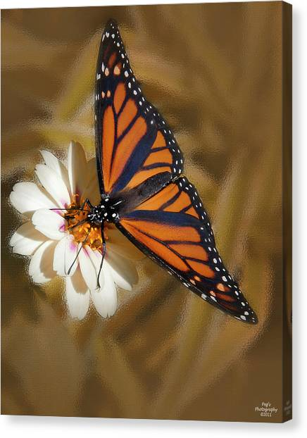 Canvas Print - White Flower With Monarch Butterfly by Peg Runyan