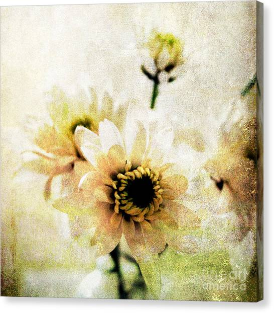 Daisy Canvas Print - White Flowers by Linda Woods