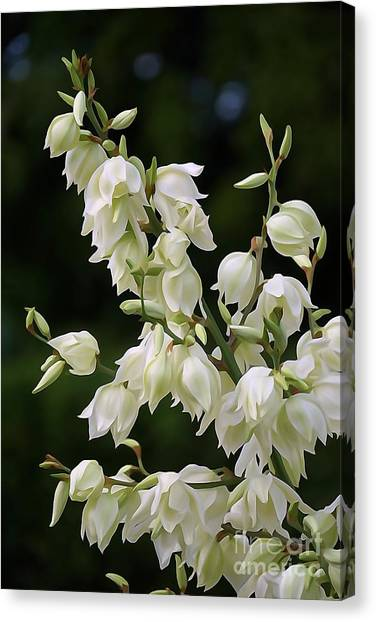 White Flowers Photography Canvas Print