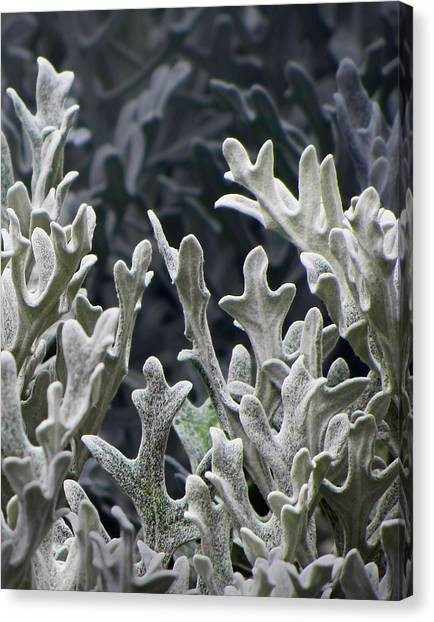 White Forest 2 Canvas Print by Michael Taggart II
