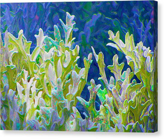 White Forest 6 Canvas Print by Michael Taggart II
