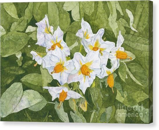 White Garden Blossoms Watercolor On Masa Paper Canvas Print