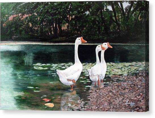White Geese In Early Fall '07 Canvas Print