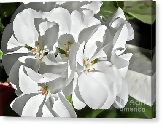 White Geraniums Canvas Print