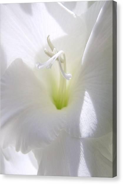 Gladiolas Canvas Print - White Gladiola Flower Macro by Jennie Marie Schell