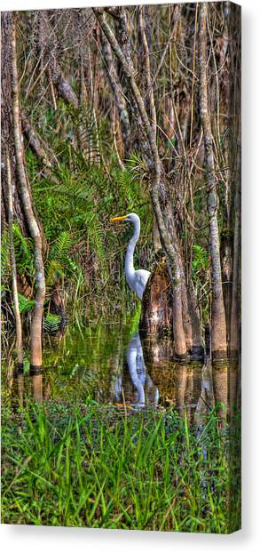 Great Cypress Canvas Print - White Heron In The Great Cypress by William Wetmore
