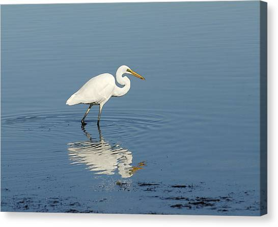 White Heron Reflected Canvas Print by Barry Culling