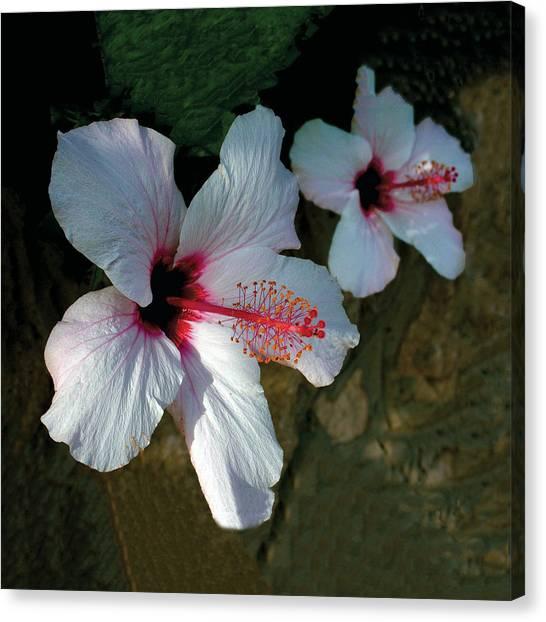 White Hibiscus Pair Canvas Print