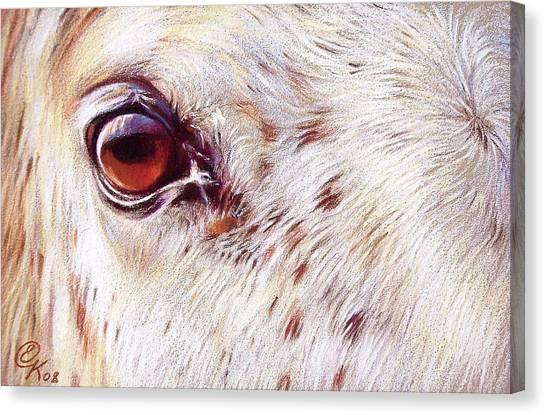 White Horse Close-up Canvas Print by Elena Kolotusha