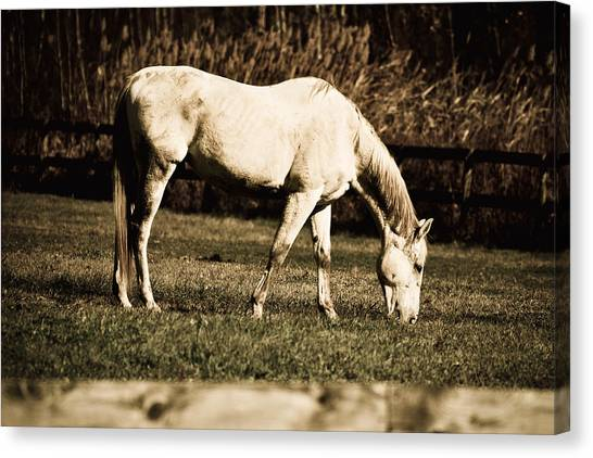 White Horse Canvas Print by Martin Rochefort