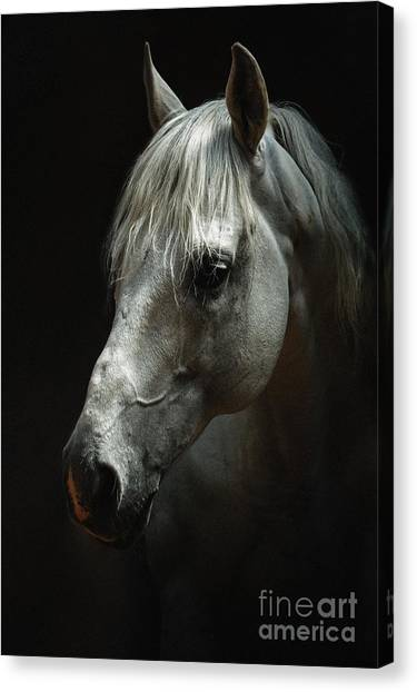 White Horse Portrait Canvas Print