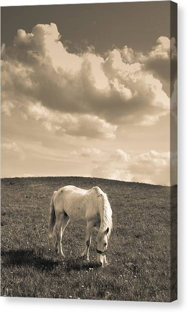 White Horse Canvas Print by Stanislovas Kairys
