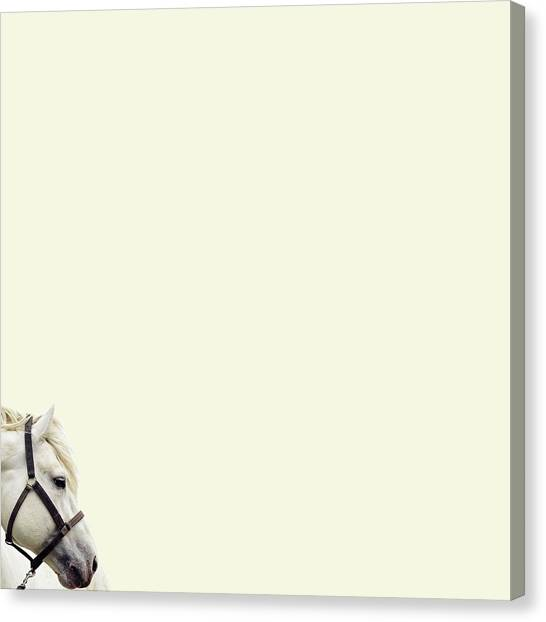 Minimal Canvas Print - White Hourse by Caterina Theoharidou