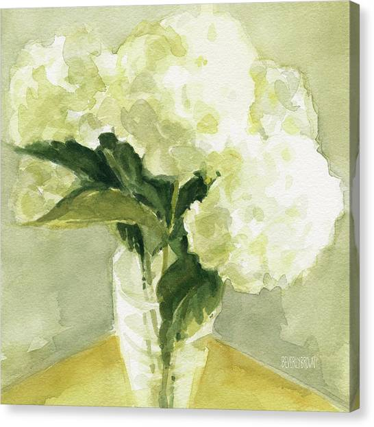 White Hydrangeas Morning Light Canvas Print