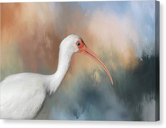 Canvas Print featuring the photograph White Ibis - 2 by Kim Hojnacki