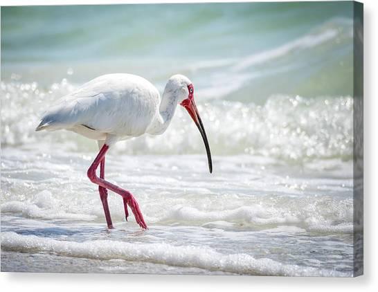 Ibis Canvas Print - White Ibis by Michael Weber