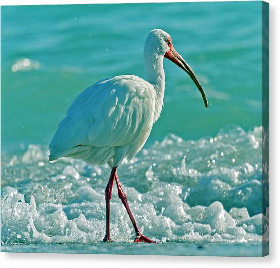 Ibis Canvas Print - White Ibis Paradise by Betsy Knapp