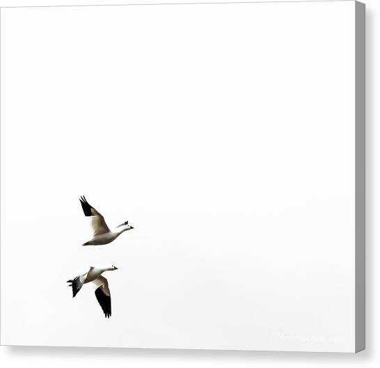 White In Flight Canvas Print