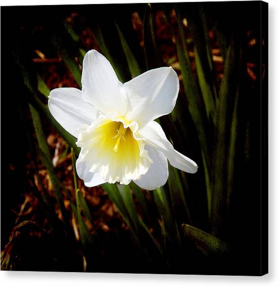 White In Nature Canvas Print