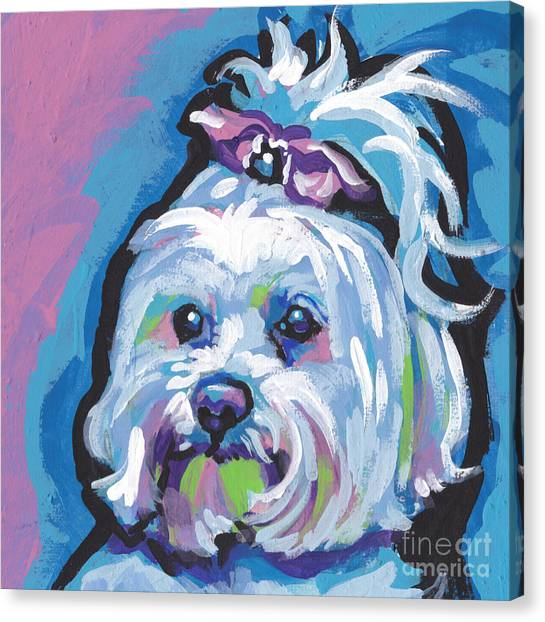 Maltese Canvas Print - White Is White by Lea S