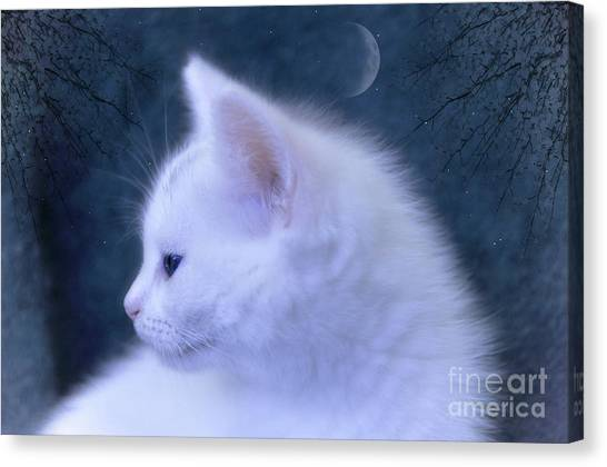 White Kitten At Night Canvas Print