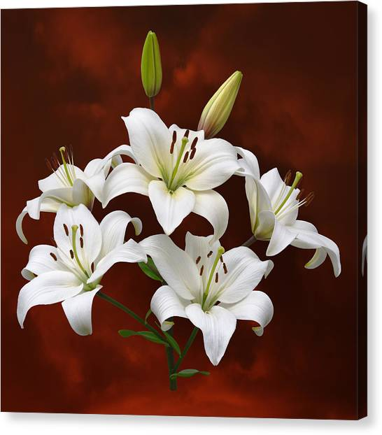 White Lilies On Red Canvas Print