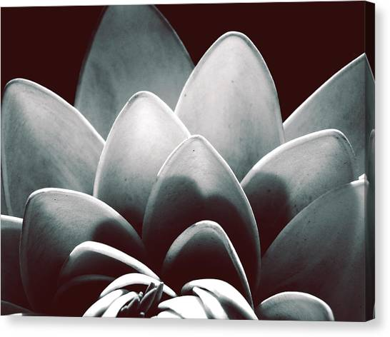 White Lotus At Dawn Canvas Print