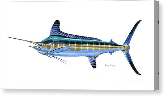 Spearfishing Canvas Print - White Marlin by Carey Chen