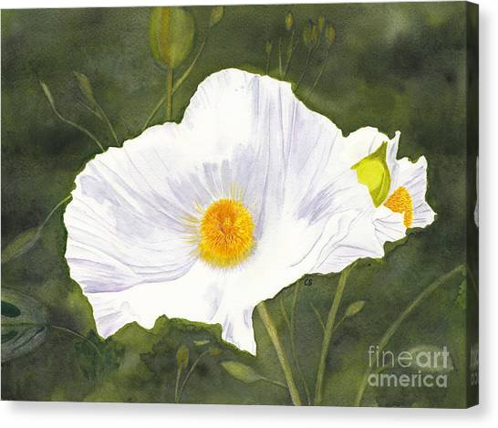 White Matilija Poppy  Canvas Print
