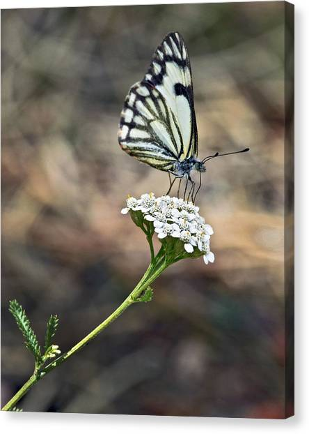 White On White Canvas Print by James Steele