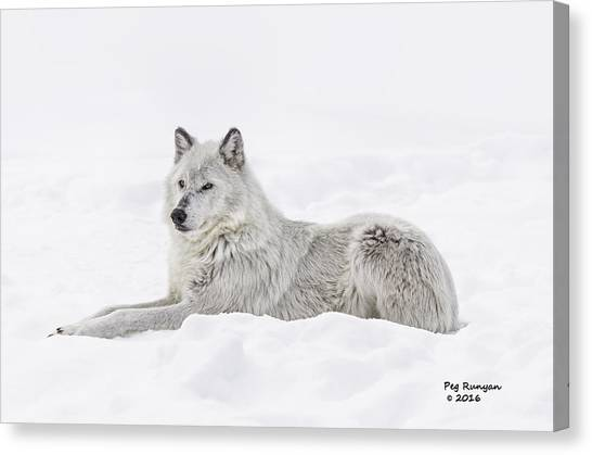 Canvas Print - White On White by Peg Runyan