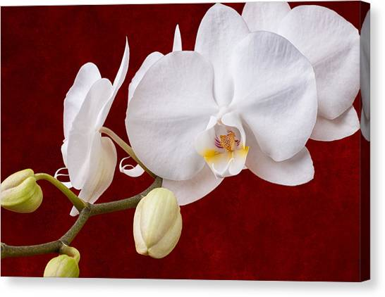 Bloom Canvas Print - White Orchid Closeup by Tom Mc Nemar