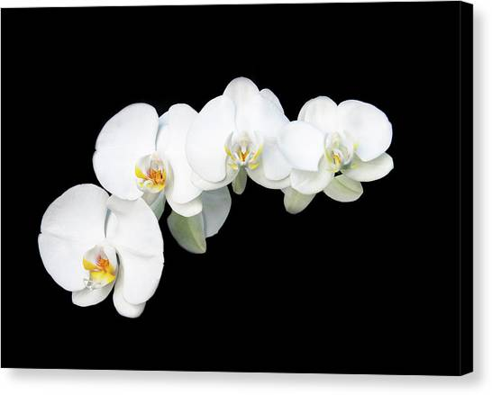 White Orchid Flower Canvas Print