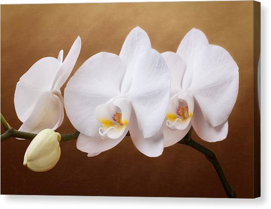 Bloom Canvas Print - White Orchid Flowers And Bud by Tom Mc Nemar