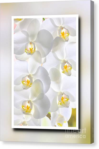 White Orchids Framed Canvas Print