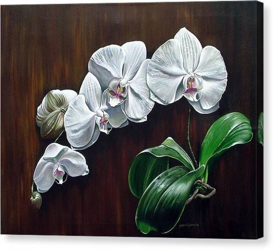 White Orchids II Canvas Print